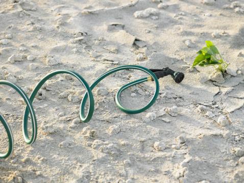 Hose「Water hose and ivy on sand」:スマホ壁紙(1)