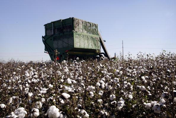 Crop - Plant「Cotton Harvest」:写真・画像(15)[壁紙.com]