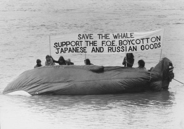 Whale「Save The Whale」:写真・画像(18)[壁紙.com]
