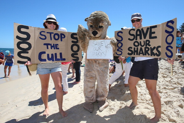 Human Role「Demonstrators Protest Against WA Shark Culling Policy」:写真・画像(3)[壁紙.com]