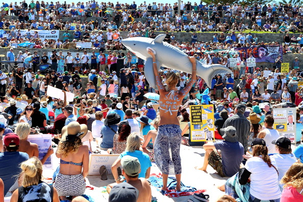 Human Role「Demonstrators Protest Against WA Shark Culling Policy」:写真・画像(4)[壁紙.com]