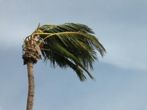 Clogged「Hurricane Palm」:スマホ壁紙(12)