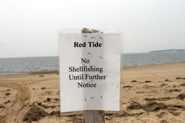 Mollusk「Red Tide Puts Strain On Clam Industry In Cape Cod」:写真・画像(10)[壁紙.com]
