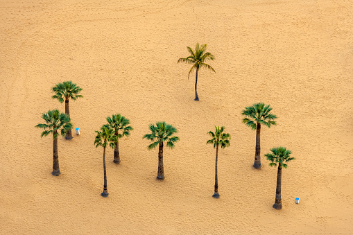 Unrecognizable Person「View of a beautiful Sandy Beach and Palm Tree in Canary Island Close up,Tenerife,Spain」:スマホ壁紙(6)