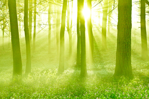 神秘「God rays illuminating spring woodland」:スマホ壁紙(3)
