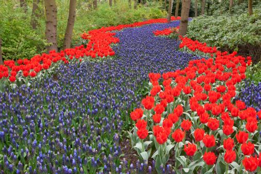Keukenhof Gardens「River of flowers, Keukenhof gardens, Netherlands」:スマホ壁紙(14)