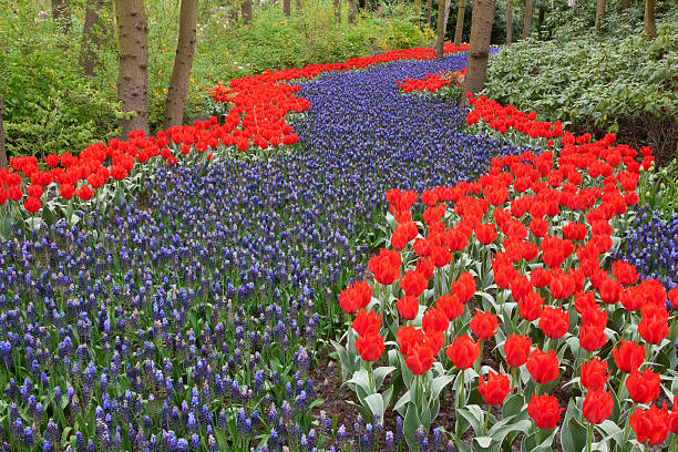 River of flowers, Keukenhof gardens, Netherlands:スマホ壁紙(壁紙.com)