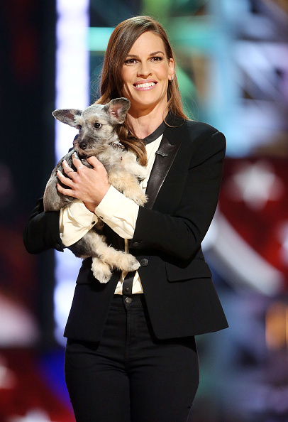 Animal Body Part「Fox's Cause For Paws: An All-Star Dog Spectacular - Show」:写真・画像(5)[壁紙.com]