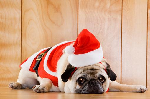 Santa Hat「Dog in Santa Suit」:スマホ壁紙(11)