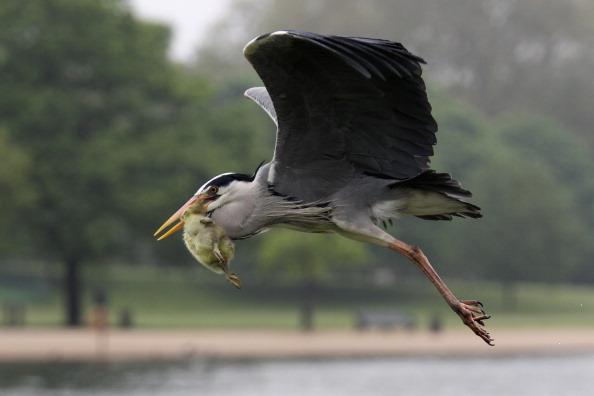 Beak「Early Morning Visitors To Hyde Park」:写真・画像(2)[壁紙.com]