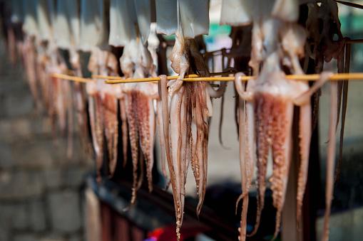 済州島「Squid hanging out to dry in Jeju Si on Jeju Island」:スマホ壁紙(14)