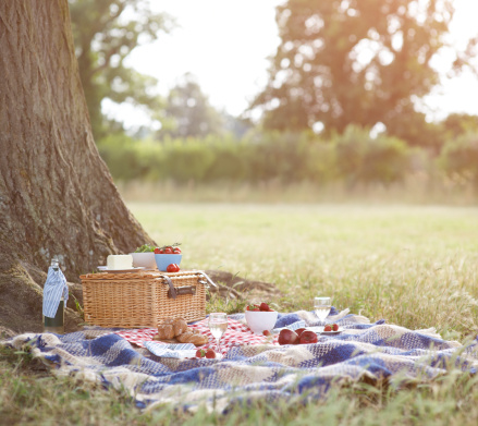 Picnic「Picnic and hamper beside tree in meadow.」:スマホ壁紙(3)