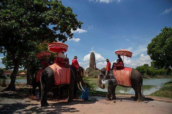 Tourism「Elephants In Thailand At Risk Amid The Coronavirus Pandemics」:写真・画像(15)[壁紙.com]