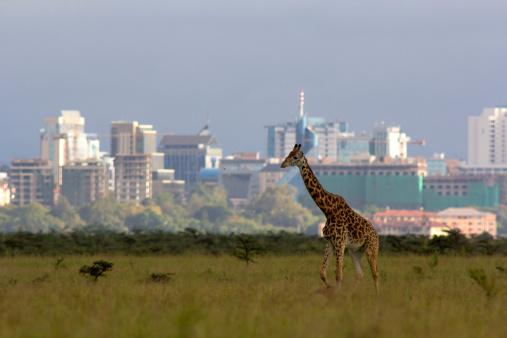 Walking「Giraffe against city skyline」:スマホ壁紙(19)