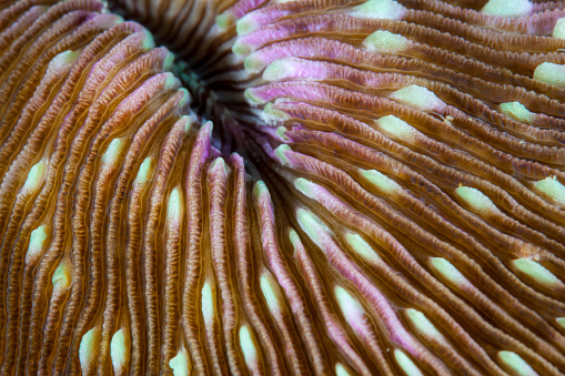 Ecosystem「Detail of a mushroom coral growing on a reef in Indonesia.」:スマホ壁紙(18)