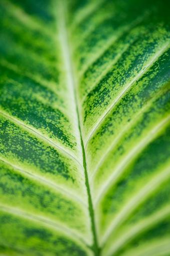 葉・植物「Detail of a leaf, Cantabria, Spain, Europe」:スマホ壁紙(15)