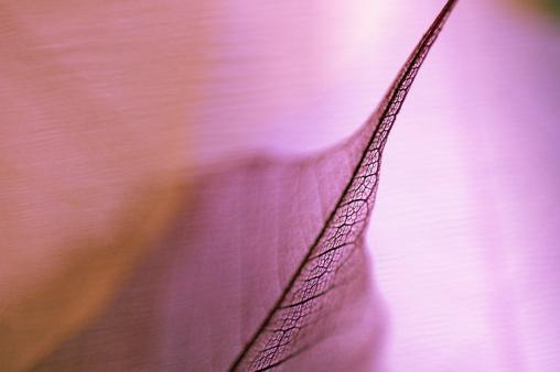 Erection「Detail of a leaf」:スマホ壁紙(16)