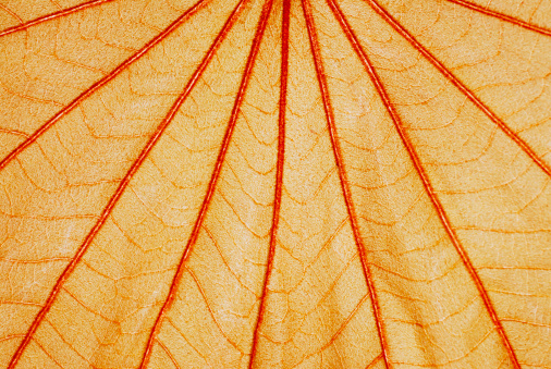 Erection「Detail of a leaf」:スマホ壁紙(18)