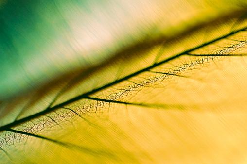 Frond「Detail of a leaf」:スマホ壁紙(4)