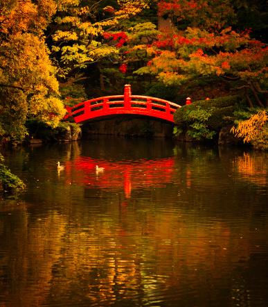 Japanese Garden「public park in tokyo」:スマホ壁紙(17)