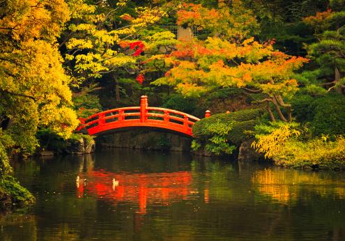 秋「東京の公園」:スマホ壁紙(19)