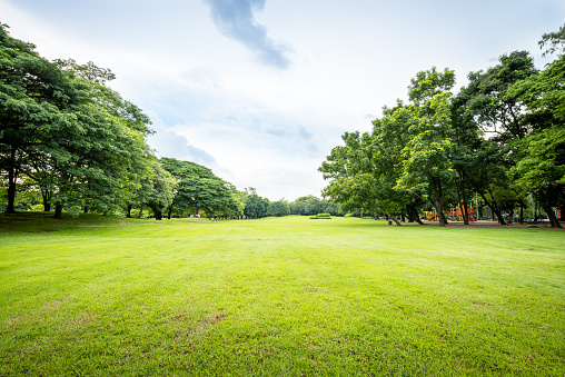 Grass「Public park landscape」:スマホ壁紙(6)