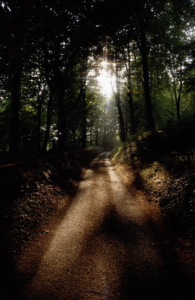 Footpath「Sunlight And Shadows」:写真・画像(2)[壁紙.com]