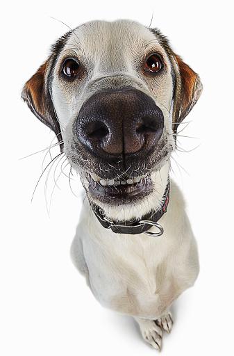 Cool Attitude「Smiling Cartoon Dog」:スマホ壁紙(0)