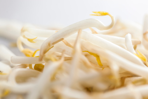 Bean Sprout「Bean sprouts」:スマホ壁紙(7)