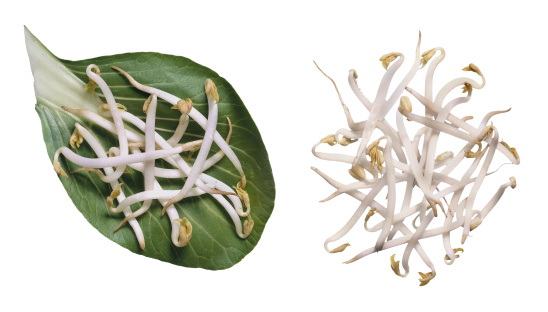 Bean Sprout「Bean sprouts」:スマホ壁紙(5)
