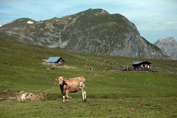 Pasture「Alm Summer Livestock Herding Offers Relief To Stressed Urban Dwellers」:写真・画像(15)[壁紙.com]