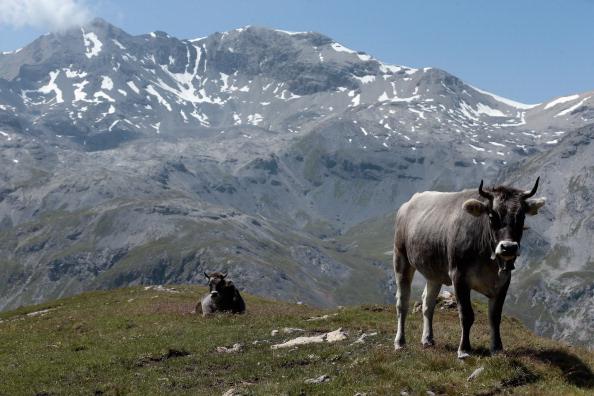 Pasture「Alm Summer Livestock Herding Offers Relief To Stressed Urban Dwellers」:写真・画像(13)[壁紙.com]