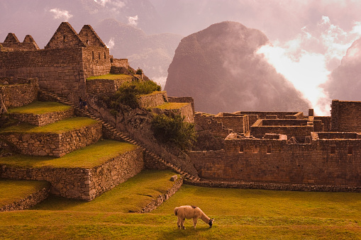 Machu Picchu「Llama Grazing at Machu Picchu」:スマホ壁紙(17)