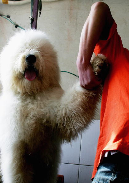 Domestic Animals「Dogs Are Trained At A Dog School In Beijing」:写真・画像(15)[壁紙.com]