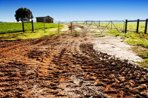 Single Tree「Farm gate with muddy dirt road」:スマホ壁紙(18)