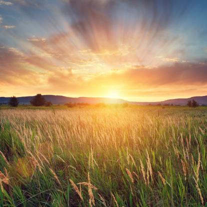 胸を打つ「夏の夕日」:スマホ壁紙(9)