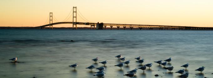 Seagull「Mackinac Bridge」:スマホ壁紙(13)