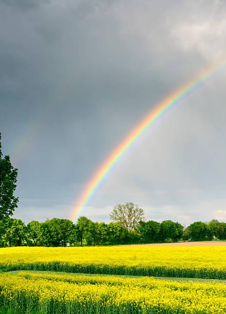 Beautiful rainbow bright yellow rapeseed landscape rainy sky:スマホ壁紙(壁紙.com)