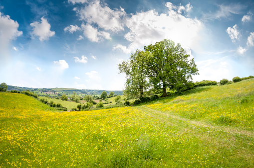 Farm「Beautiful Rolling Landscape On A Summers Day In The Cotswolds」:スマホ壁紙(3)