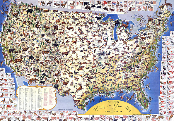 Animals Hunting「'Wildlife And Game Map Of The United States'」:写真・画像(17)[壁紙.com]