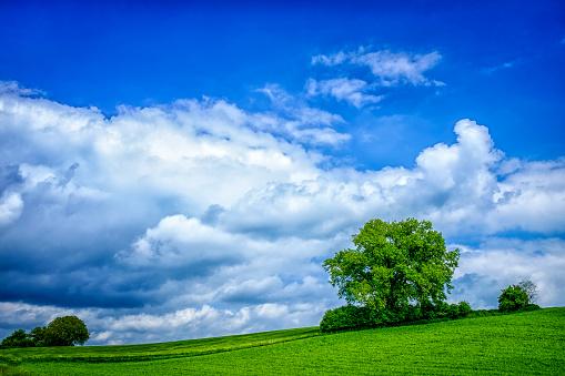 生い茂る「Fields landscape with cloudy sky」:スマホ壁紙(15)
