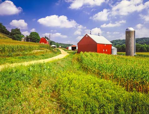 Midwest USA「Wisconsin farm and corn field」:スマホ壁紙(11)