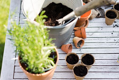 Planting「Gardening accessories on table」:スマホ壁紙(8)