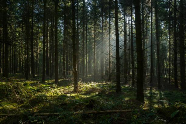 Sunbeams in dark and foggy autumn forest:スマホ壁紙(壁紙.com)