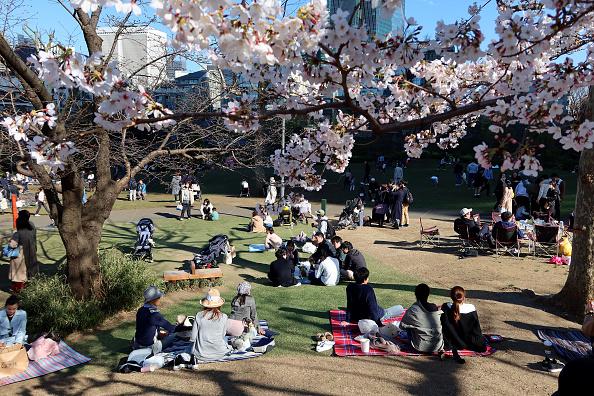Cherry Blossoms「Japan Enjoys Cherry Blossom Season Amid The Continuing Coronavirus Pandemic」:写真・画像(3)[壁紙.com]