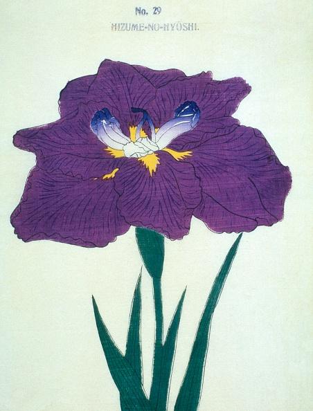 Petal「Hizume-No-Hyoshi」:写真・画像(19)[壁紙.com]