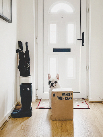 Waiting「French Bulldog guarding a delivery box at the front door」:スマホ壁紙(17)
