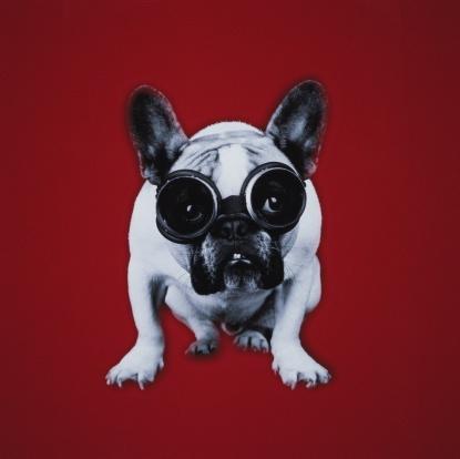 Flying Goggles「French bulldog wearing tanning goggles」:スマホ壁紙(16)