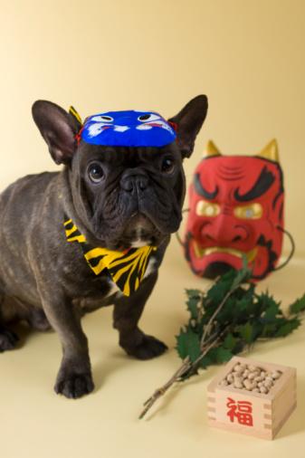 節分「French Bulldog Puppy and Setsubun」:スマホ壁紙(14)