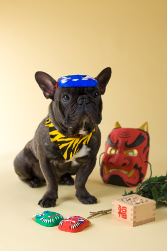 節分「French Bulldog Puppy and Setsubun」:スマホ壁紙(18)
